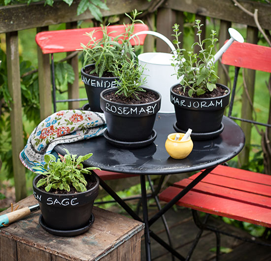 chalk pint Potted Plants