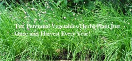 perennials vegetables and herbs