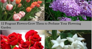 fragnant flowers to grow