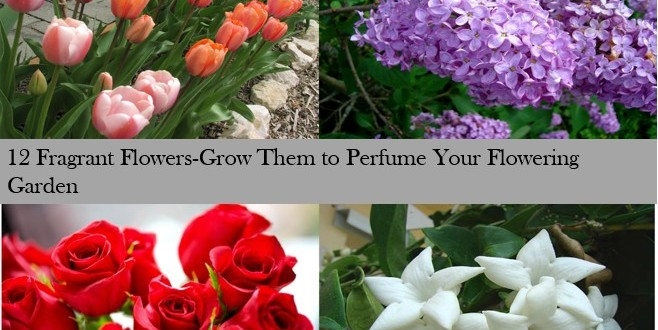 12 Fragrant Flowers Grow Them To Perfume Your Flowering Garden U2013 Home And  Gardening Ideas