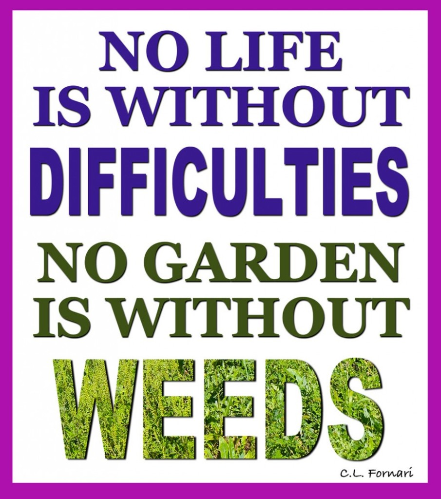 Garden Design Quotes : Inspiring gardening quotes and sayings by famous authors