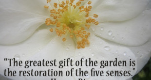 gardening quotes and saying