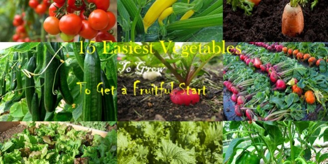 Genial 15 Easiest Vegetables To Grow To Get A Fruitful Start U2013 Home And Gardening  Ideas