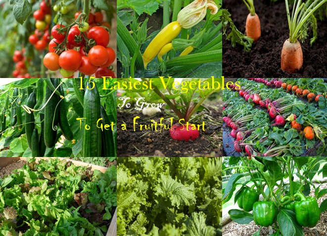 15 easiest vegetables to grow to get a fruitful start for Easiest vegetables to grow