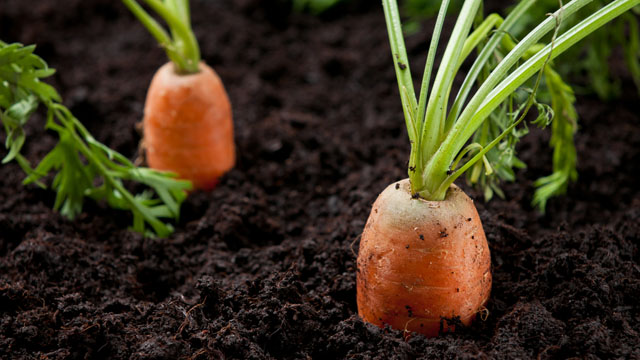 15 Easiest Vegetables To Grow To Get a Fruitful Start ...