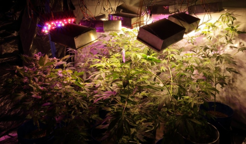 10 Diy Led Grow Lights For Growing Plants Indoors Home