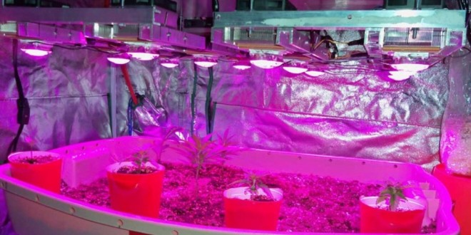 gardening floor ideas 10 diy led grow lights for growing plants indoors home and
