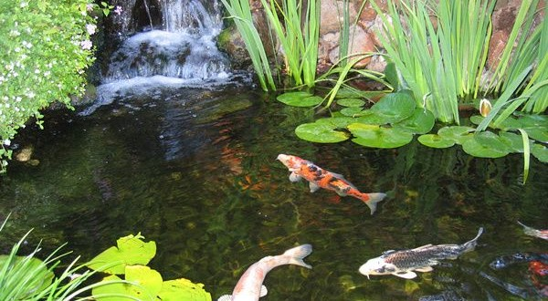 7 ideas for building a koi fish and backyard pond home for Design fish pond backyard