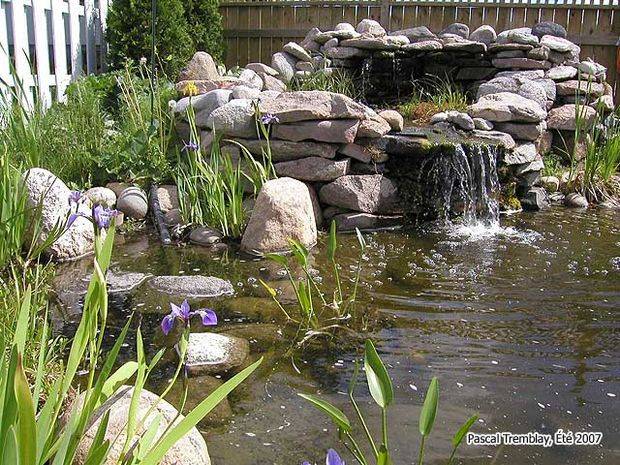 7 ideas for building a koi fish and backyard pond home for Building a water pond