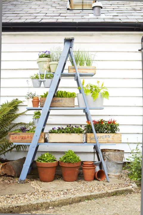 Use Ladder To Prepare A Frame Plant Stand