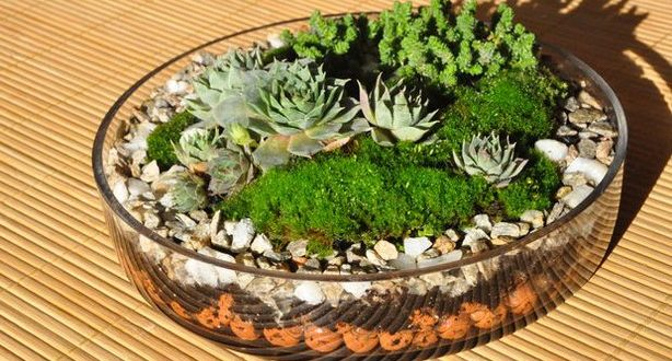 plants-for-terrarium