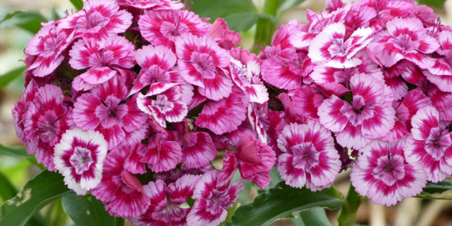 Top 15 Flowers That Bloom In Winter Season Home And