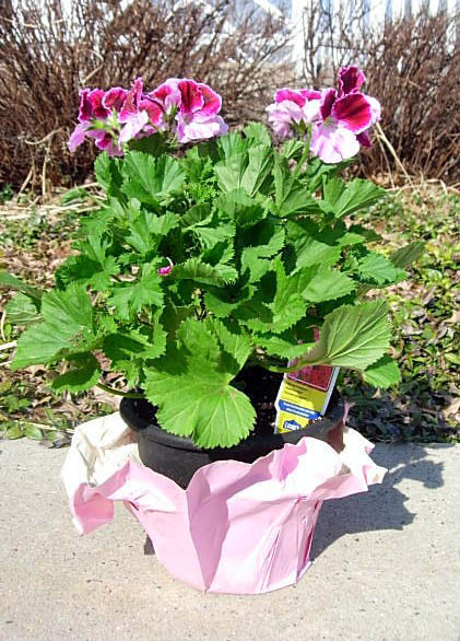recycle old planters