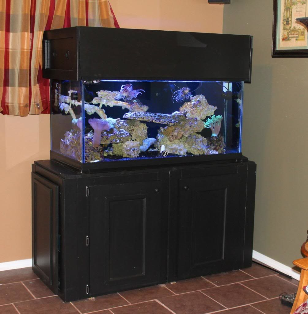 Home Aquarium Design Ideas: 25+ DIY Aquarium Stands For Various Sizes Of Fish Tanks